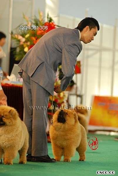 07.5.13金小欣在青岛全犬种大赛获得WB