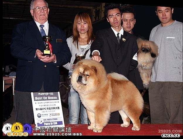 07.10.4日HOPE获第八届cpc松狮组冠军BOB非运动组BIG3图片