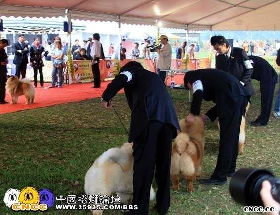 07.10.4日HOPE获第八届cpc松狮组冠军BOB非运动组BIG3