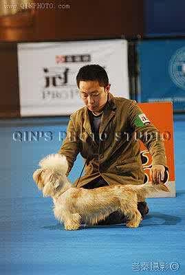 07.10.7日HOPE获FCI全犬种中国冠军展全场总冠军BIS