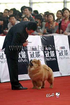 07.12.2日CASTLE获南宁名犬冠军展全场总冠军BIS松狮冠军