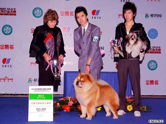 07.12.8HOPE获长沙FCI中国冠军展BOB BIG2挑战成犬成功