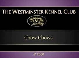 2005美国西敏寺松狮比赛视频AKC CHOW CHOW DOG SHOW图片