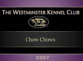 2005美国西敏寺松狮比赛视频AKC CHOW CHOW DOG SHOW