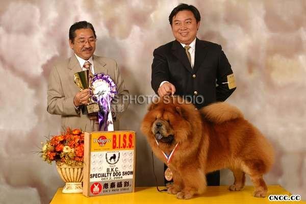 04年CASH现金获得BKC松狮犬单独展全场总冠军BISS