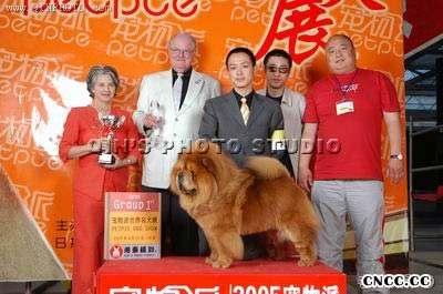 05年宠物派世界名犬展松狮犬冠军CASH现金和丫丫图片
