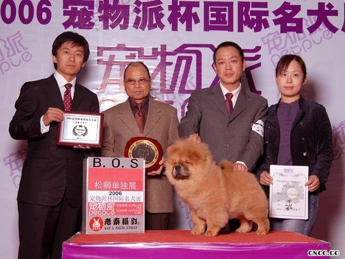 FIRST JJ2006年宠物派杯松狮单独展获得全场BOS