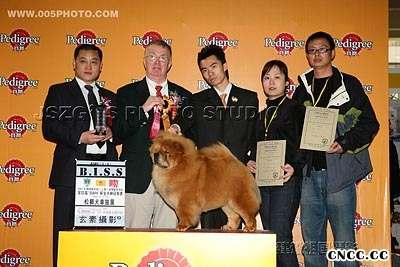 07年3月上海宠物嘉年华YOYO松狮单独展全场总冠军BISS图片