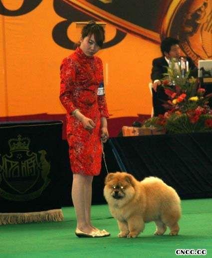 07.04.20HOPE获名将金项圈冠军争霸赛松狮幼犬WD