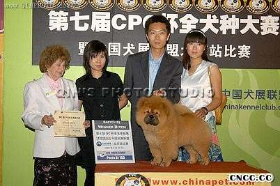 07.5.27金小欣在北京CPC杯获松狮犬WB松狮犬冠军