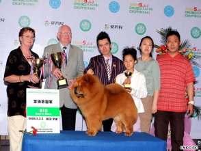 天意获CKU宁波国际冠军展全场总冠军BIS松狮犬冠军