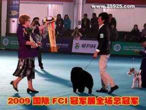 松狮视频2009FCI中国冠军展CACIB黑牛获全场总冠军BIS一集