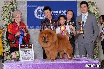 2008.6.7日天意获27届CKC温州站全场总冠军RBIS松狮
