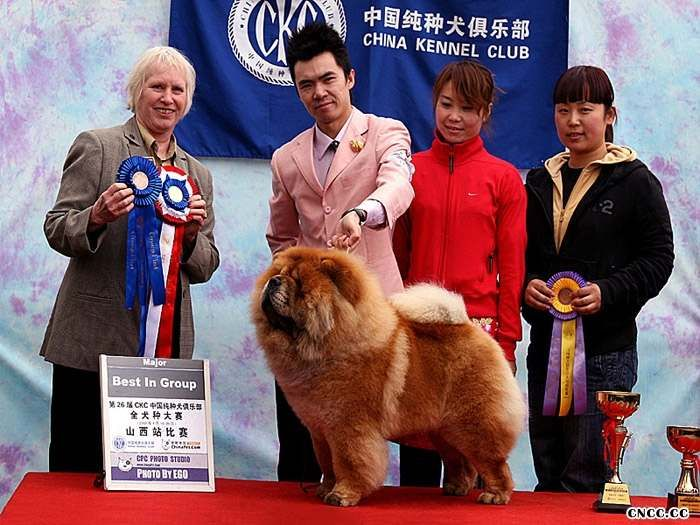 08.04.19FIRST CASH获CKC太原全犬种赛松狮冠军图片