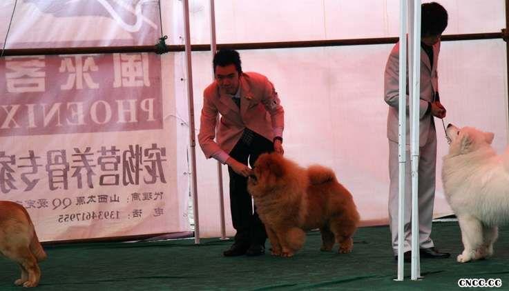08.04.20KING获26届CKC太原站全场总冠军BIS