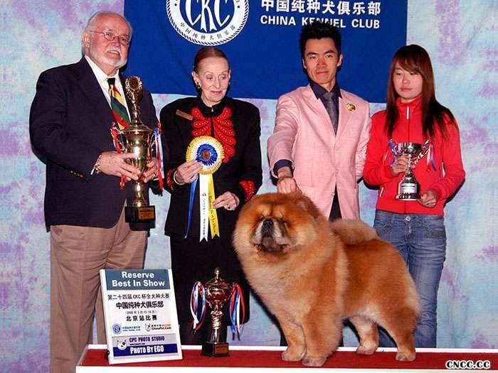松狮冠军08.03.16CKC全犬种比赛FIRST CASH获全场总冠军