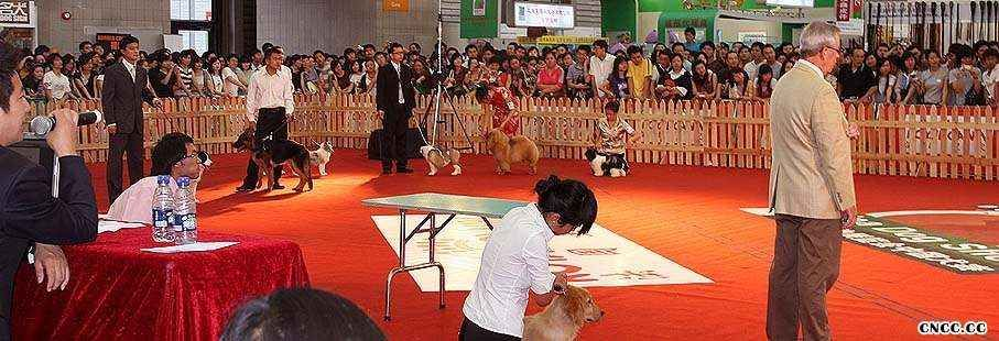 2008.9.6日LEADER获亚洲宠物展犬王和松狮冠军