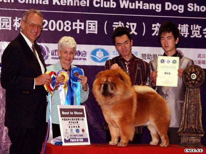 2008年11月14日小现金获武汉全场总冠军BIS图片