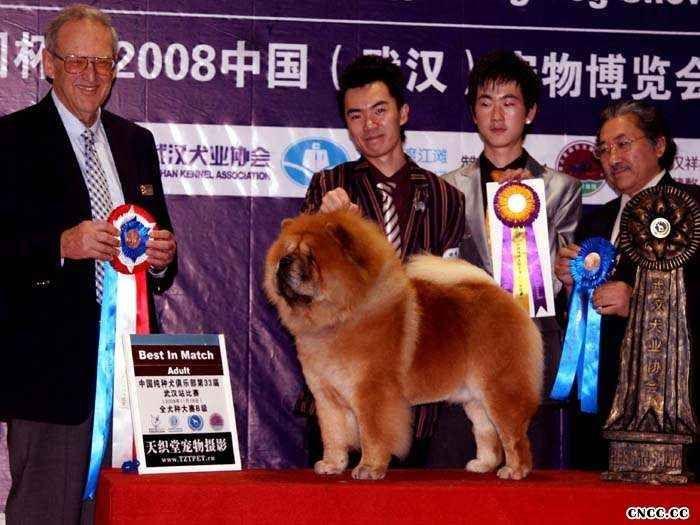 08.11.16日小现金获33届中国纯种犬全场总冠军BIS