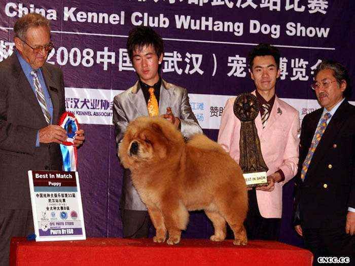2008.11.14日LEADER获武汉全场总冠军BIS松狮冠军图片