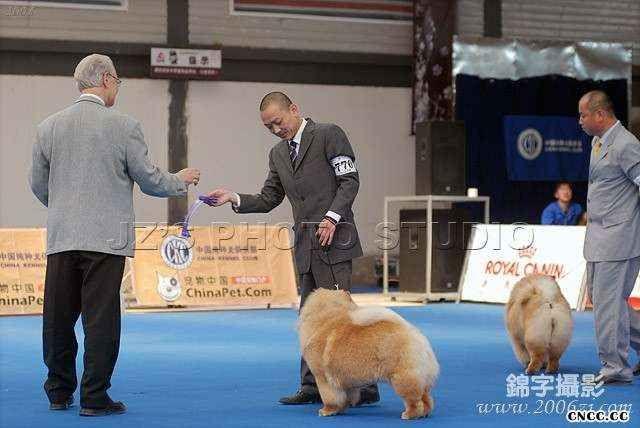 08.5.10首届国家松狮单独展FIRST CASH获全场总冠军