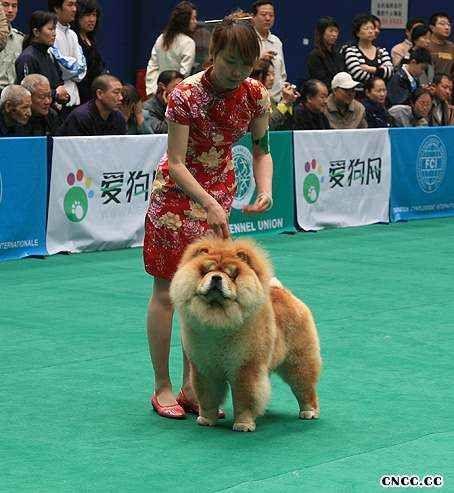 2008.5.10日FCI国际冠军展HOPE获全场总冠军