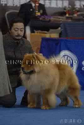 08.03.23南京松狮单独展小现金获全场总冠军BISS
