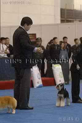 08.03.23小现金获25届CKC全犬种大赛全场总冠军BIS