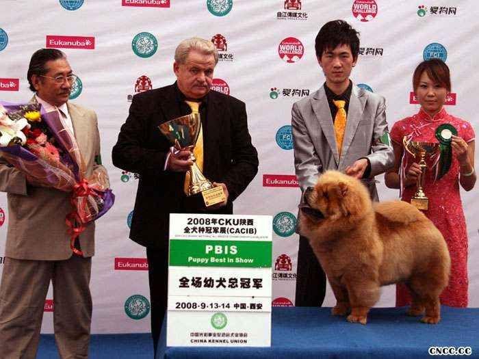 08年9月14日LEADER获西安FCI国际冠军展全场总冠军图片
