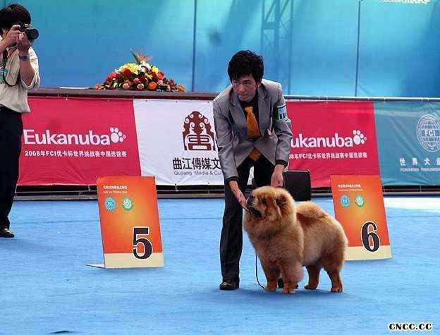 08年9月14日LEADER获西安FCI国际冠军展全场总冠军