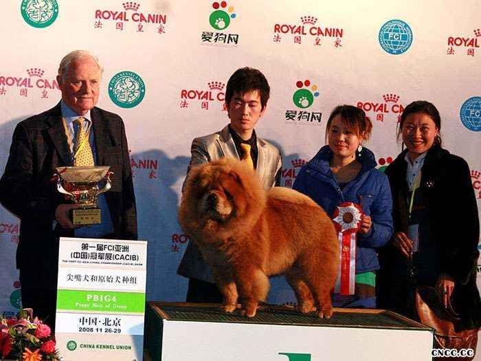 2008.11.26LEADER获第一届FCI亚洲中国冠军展松狮冠军图片