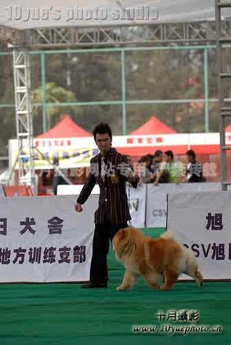 09.2.22HOPE富贵包揽深圳松狮冠军富贵全场总冠军BIS