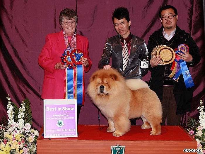 09年3月6日上海佛爷获得全场总冠军BIS和超级BIS图片