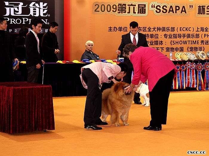 09年3月6日上海佛爷获得全场总冠军BIS和超级BIS