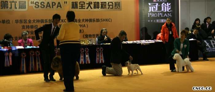 09.3.8上海6个松狮冠军5个全场总冠军BIS包揽超级BIS