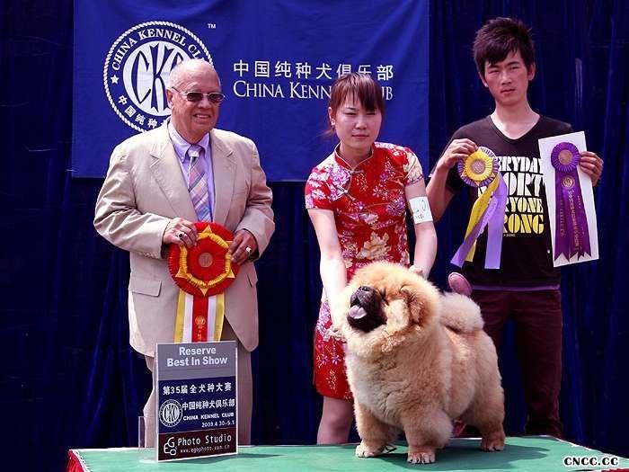 09.4.30小现金获35届CKC北京展松狮冠军非运动组冠军BIG