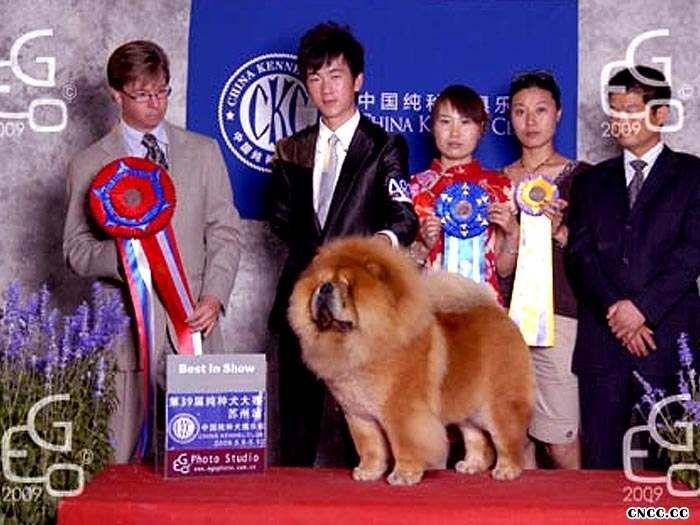 09.5.9日39届CKC苏州A级赛小现金获全场总冠军BIS图片