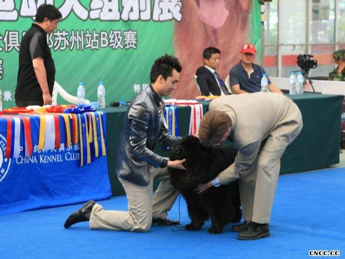 09.5.9日39届CKC苏州A级赛小现金获全场总冠军BIS
