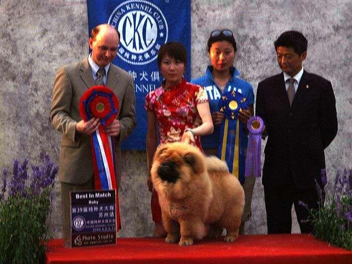 09.5.10第三届苏州国际名犬展战神获全场总冠军BIS图片