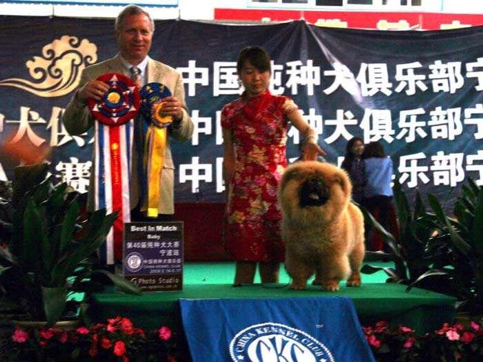 09年5月17日第40届CKC宁波站战神获全场总冠军BIS