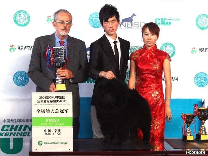 09.9.5FCI全犬种国际冠军展CACIB黑牛获全场总冠军图片
