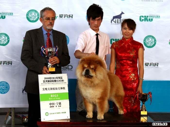 2009.9.5-6FCI华东区全犬种国际冠军展HOPE获松狮冠军