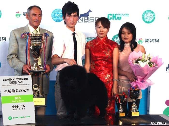 2009.9.5-6日CKU宁波全犬种冠军展黑牛获全场总冠军BIS图片