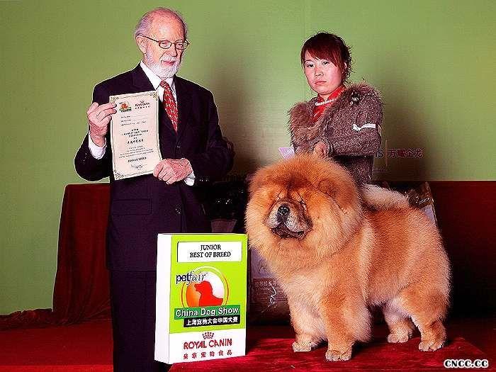 10年3月13日-14日上海宠物大会战神获2个非运动组冠军