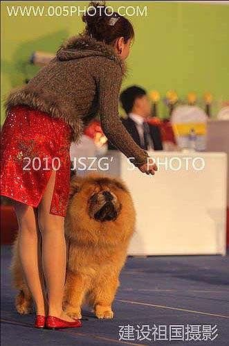2010年3月13日-14日上海宠物大会中国犬赛战神获得2个非运动组冠军BIG松狮冠军BOB