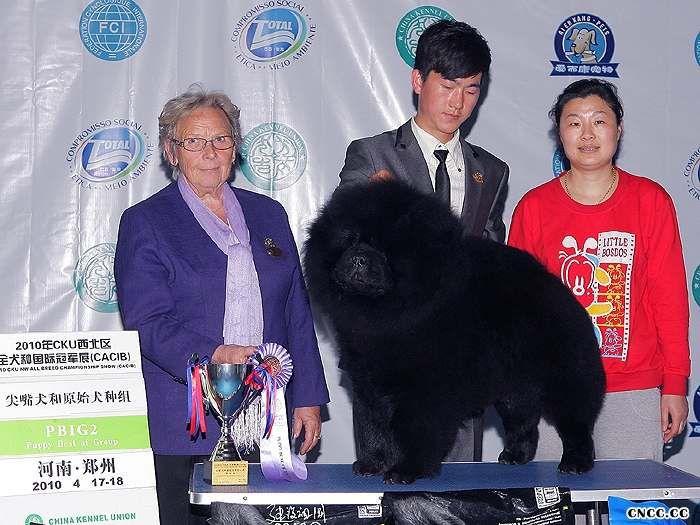 2010年4月18日黑金获得郑州FCI国际冠军展BIG2松狮冠军