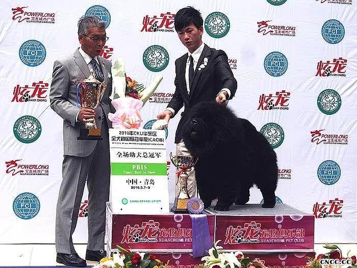 2010.5.9黑金获青岛FCI国际冠军展CACIB全场总冠军BIS图片