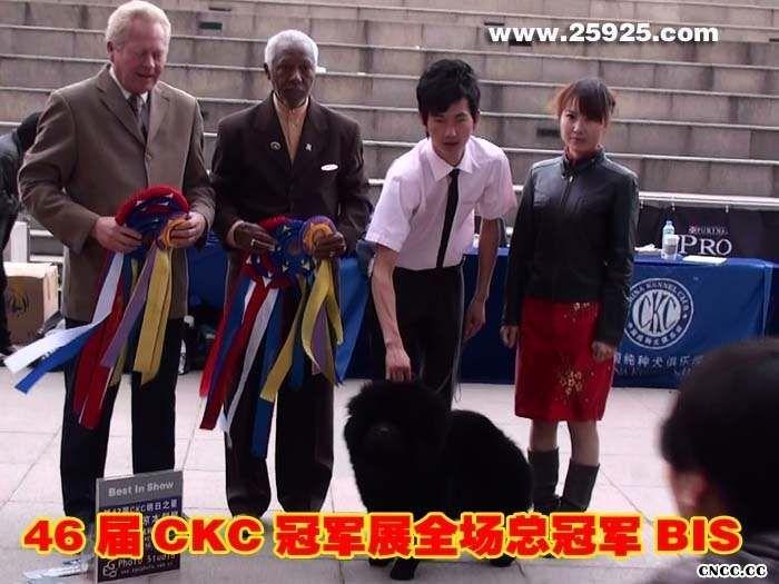 09.10.17黑牛获46届中国纯种犬俱乐部本部展全场总冠军图片