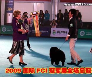 09.10.24FCI中国冠军展CACIB黑牛获全场总冠军BIS图片