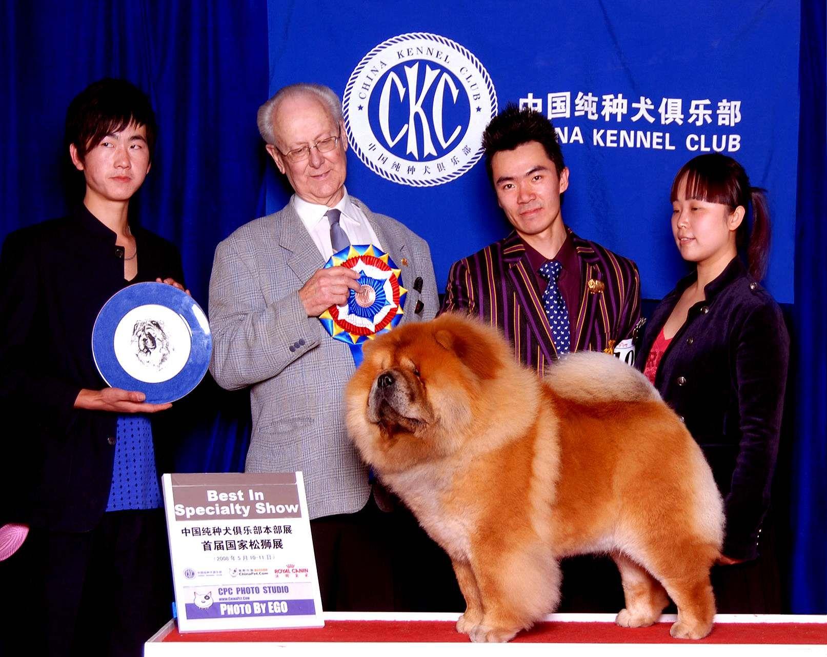 小现金获首届国家松狮单独展全场总冠军BISS图片